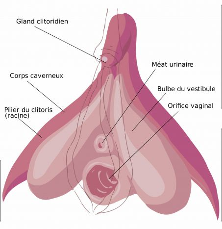 10 - representation-clitoris.jpg
